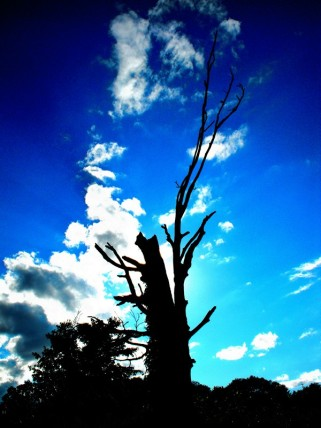 Dead Tree Silhouette Contrasted